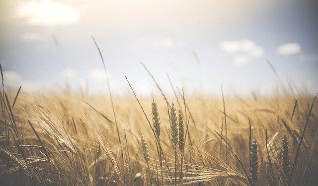مفردات الزراعة بالإنجليزية