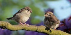 أسماء الطيور بالإنجليزية