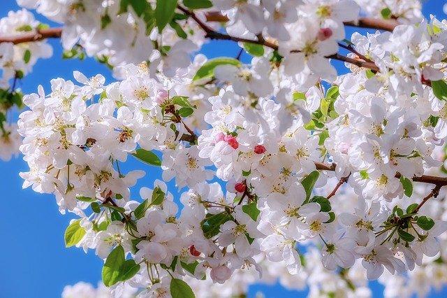 أسماء الزهور والأشجار بالإنجليزية مع النطق الإنجليزية بالعربي