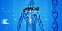 مفردات الهيكل العظمي للإنسان بالإنجليزية