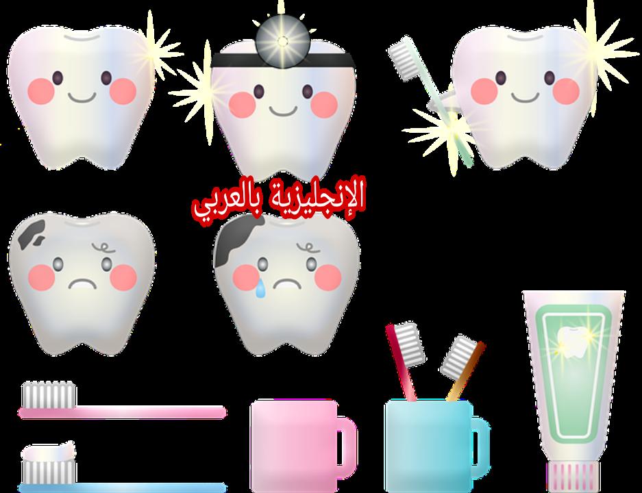 أسماء الأسنان بالإنجليزية مترجمة للعربية مع النطق الإنجليزية بالعربي