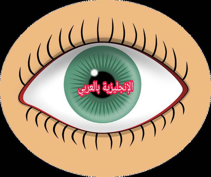 أجزاء العين بالإنجليزي والعربي مع النطق الإنجليزية بالعربي