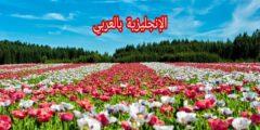 النباتات بالإنجليزي والعربي