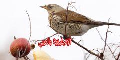 أجزاء جسم الطائر بالإنجليزي والعربي