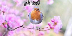 فصل الربيع في اللغة الإنجليزية