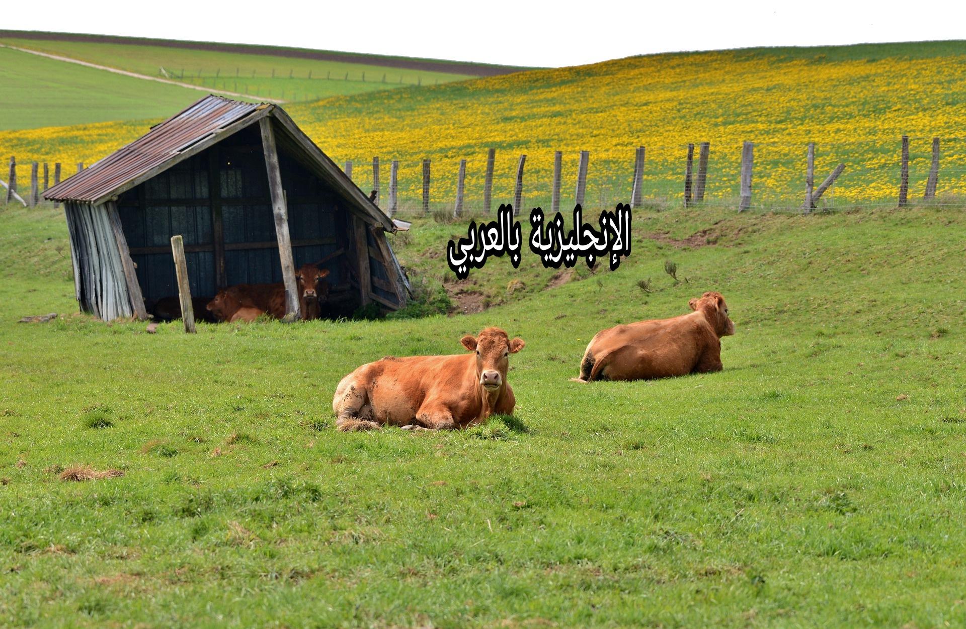 منازل الحيوانات بالإنجليزية