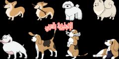 الكلاب في اللغة الإنجليزية