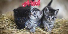 أسماء القطط في الإنجليزية
