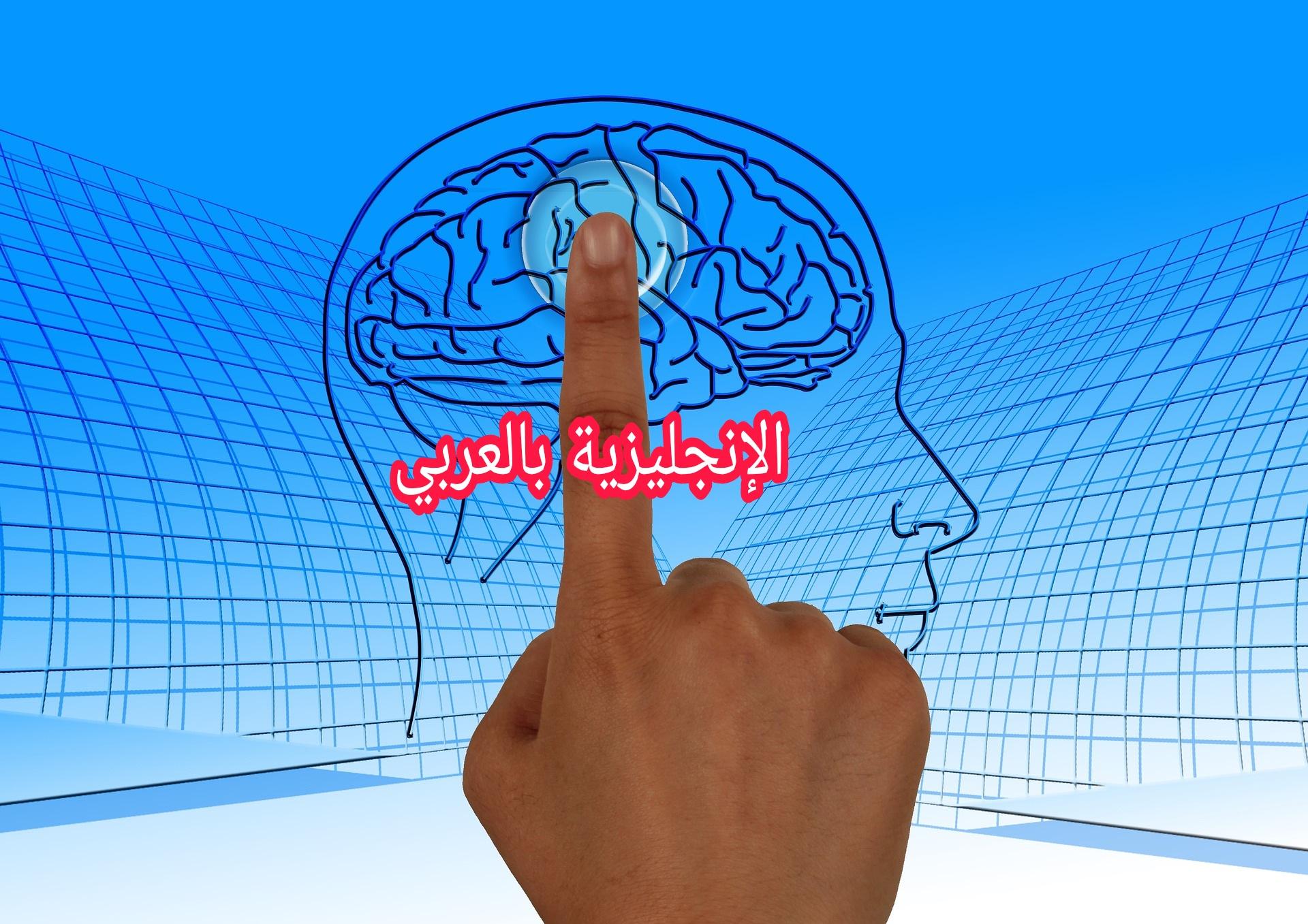 دماغ الإنسان باللغة الإنجليزية
